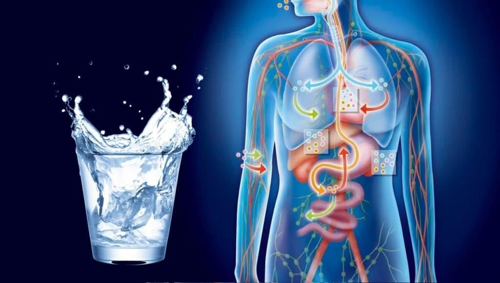 Жидкость выводит токсины из организма.