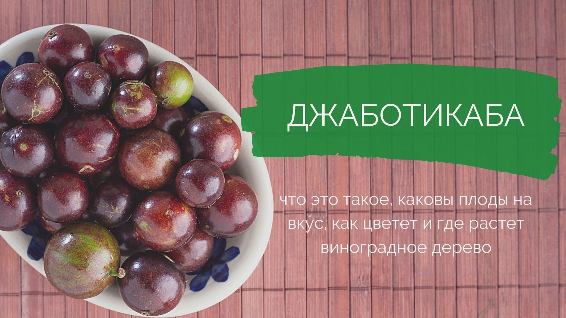 Джаботикаба: что это такое, какой на вкус, как цветет и где растет виноградное дерево