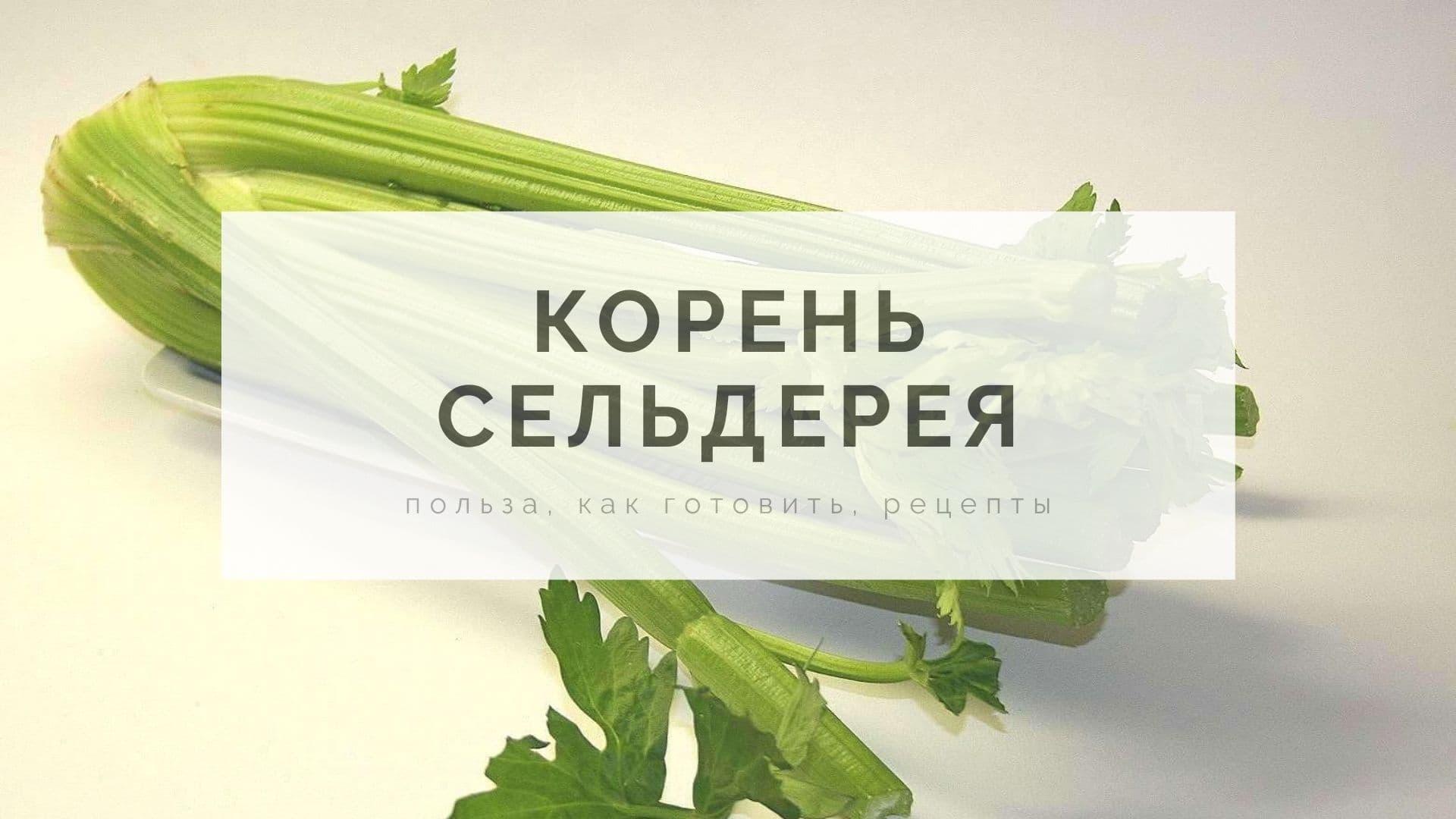 Корень сельдерея: польза, как готовить, рецепты
