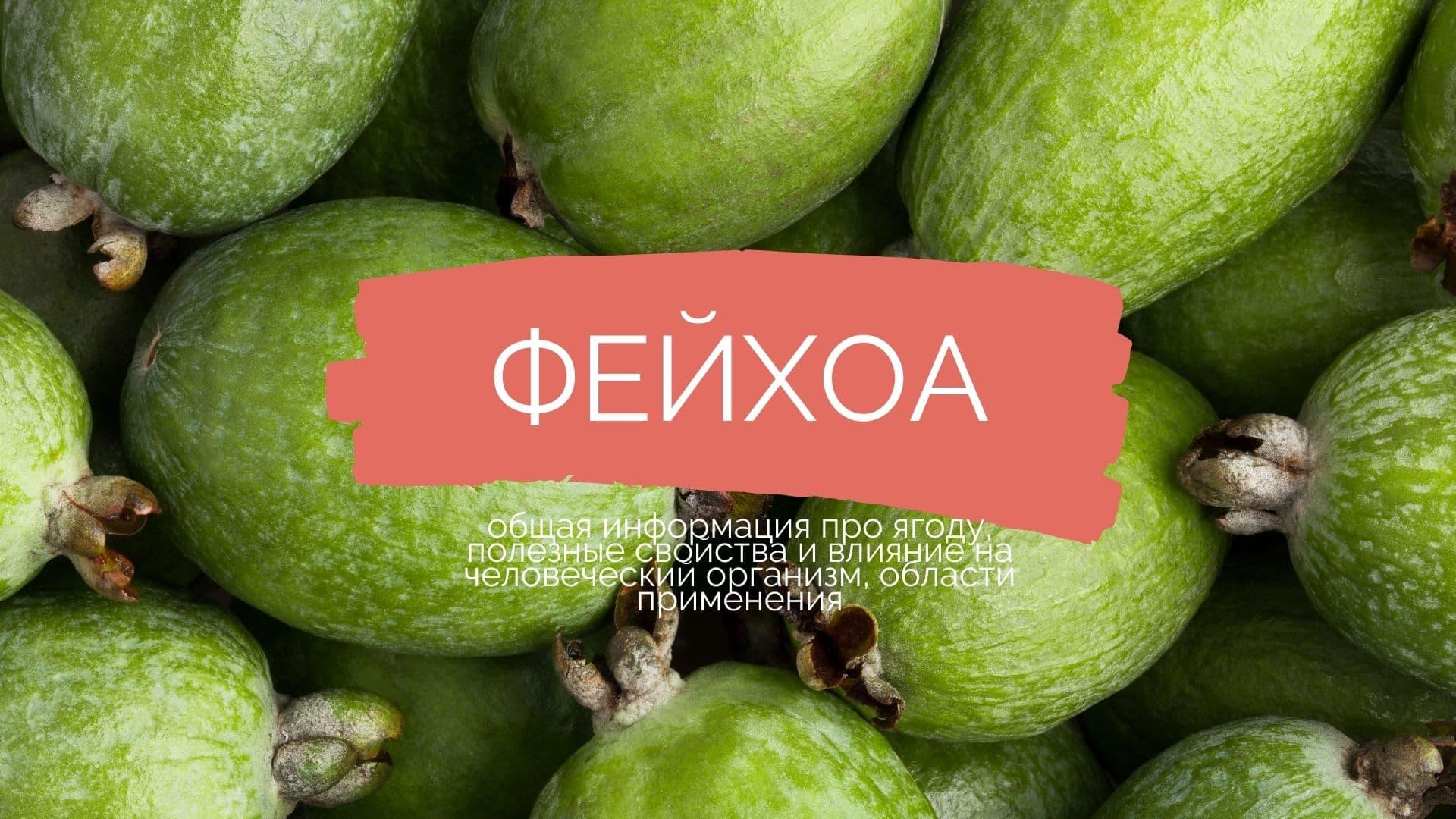 Фейхоа: общая информация про ягоду, полезные свойства и влияние на человеческий организм, области применения