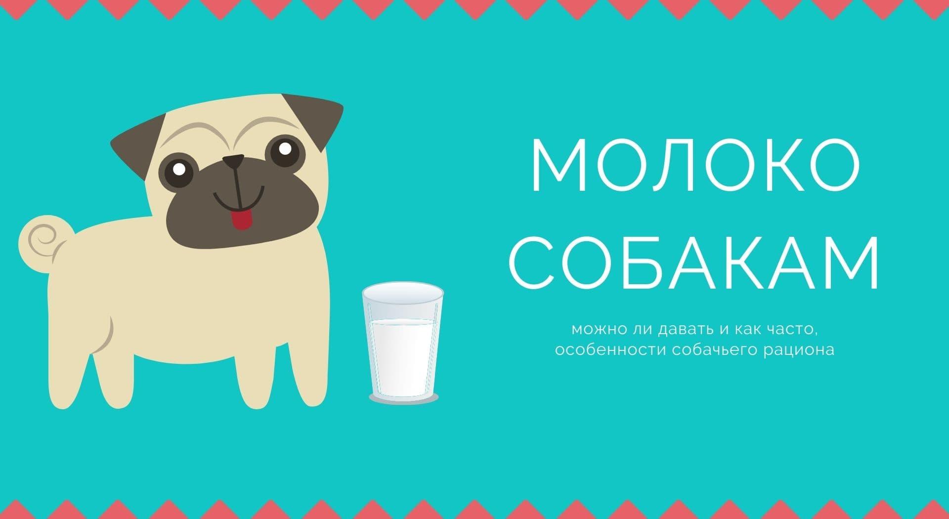 Молоко собакам: можно ли давать и как часто, особенности собачьего рациона