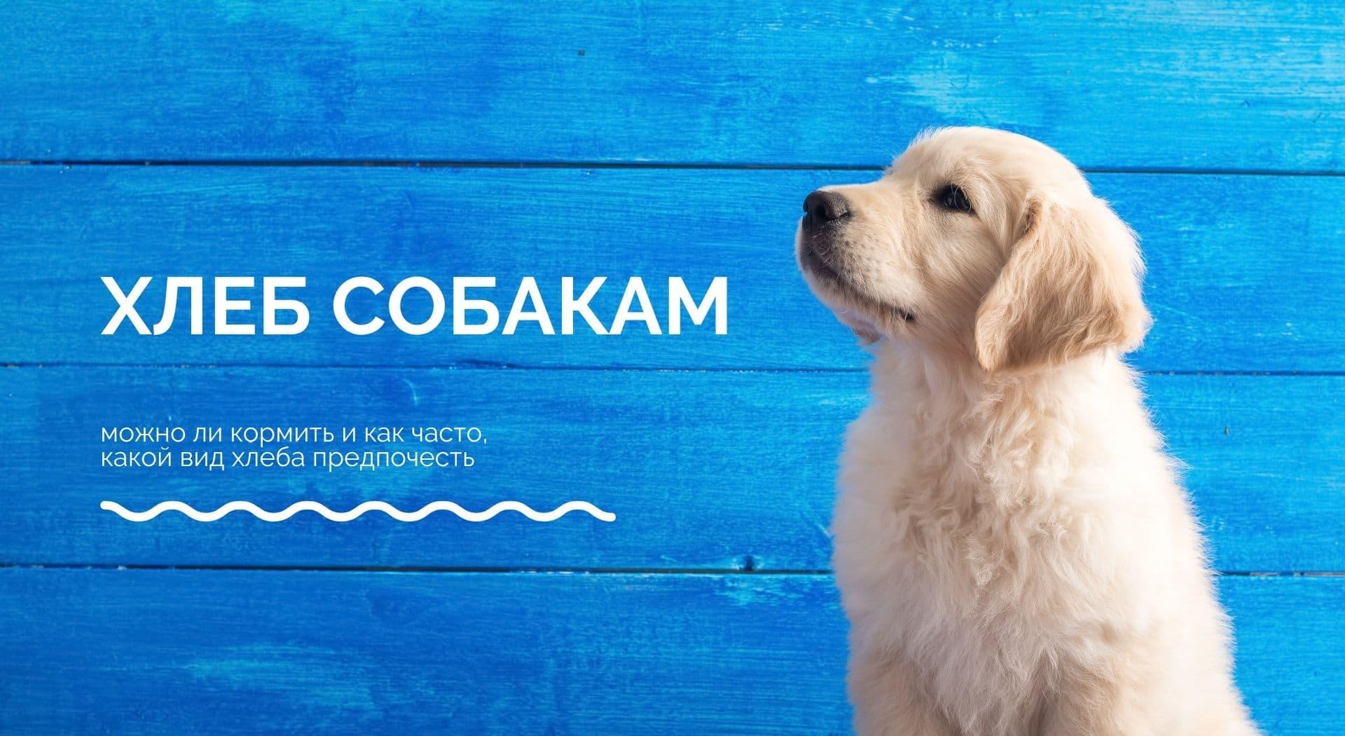 Хлеб собакам: можно ли кормить и как часто, какой вид хлеба предпочесть