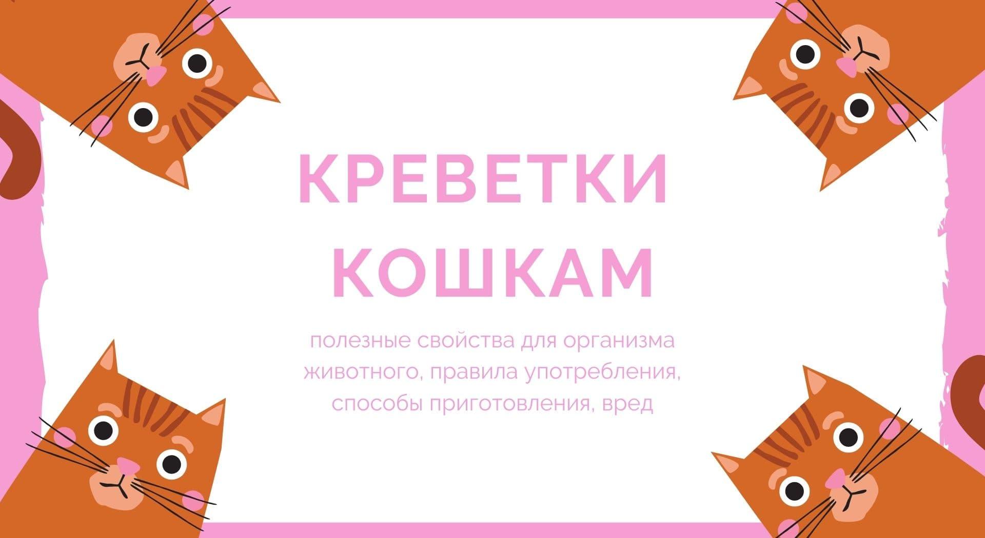 Креветки кошкам: полезные свойства для организма животного, правила употребления, способы приготовления, вред