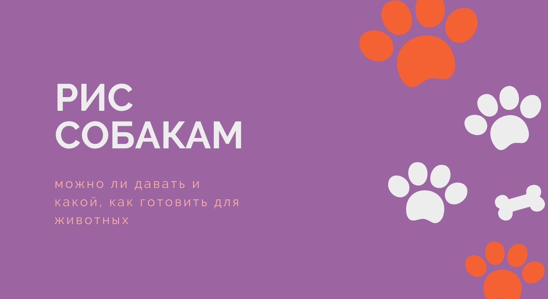 Рис собакам: можно ли давать и какой, как готовить для животных