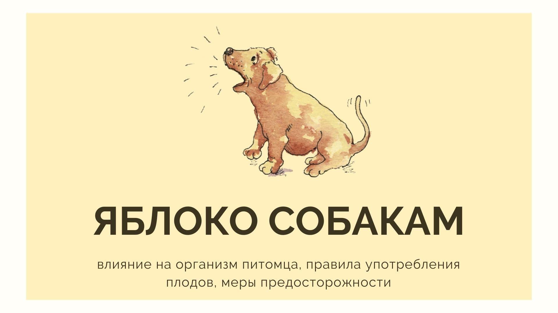 Яблоко собакам: влияние на организм питомца, правила употребления плодов, меры предосторожности