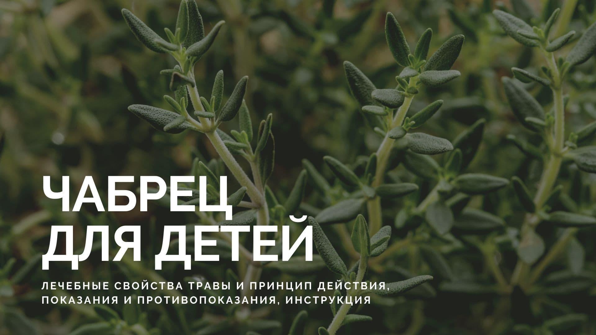 Чабрец для детей: лечебные свойства травы и принцип действия, показания и противопоказания, инструкция